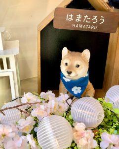 横浜元町店はまたろうDP2020/02/20